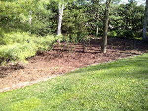 20 yds soil, 10 yds mulch and a country Lilac Garden is installed