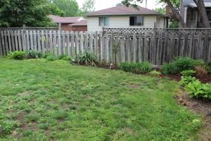 Brantford backyard Before