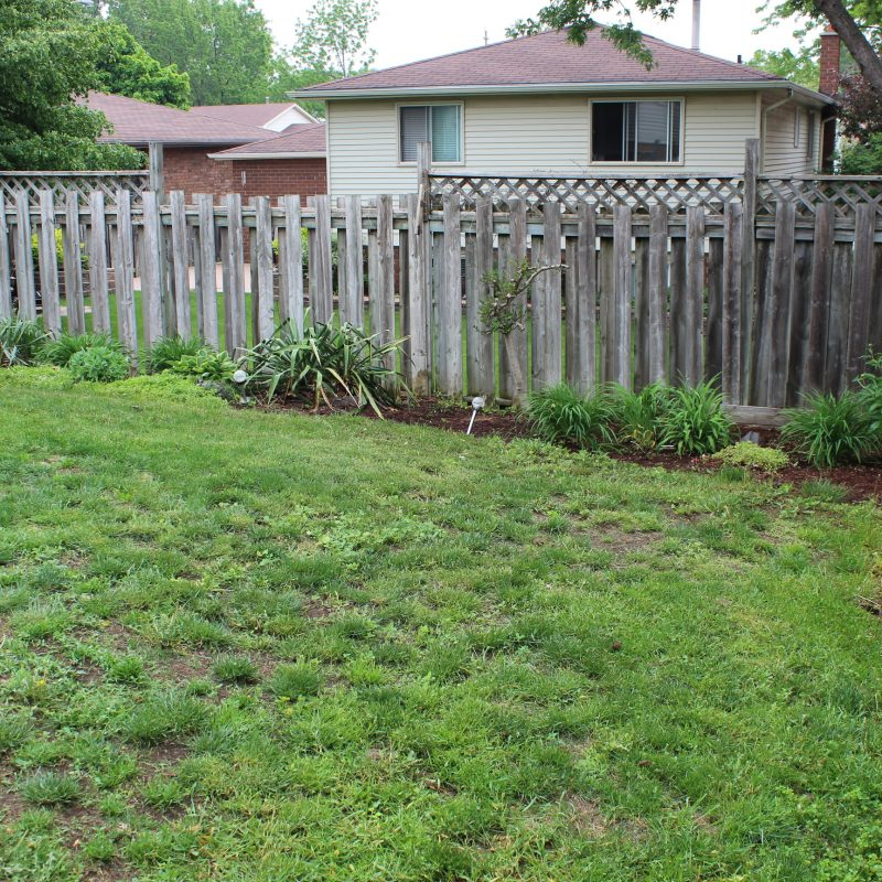 Brantford backyard Before